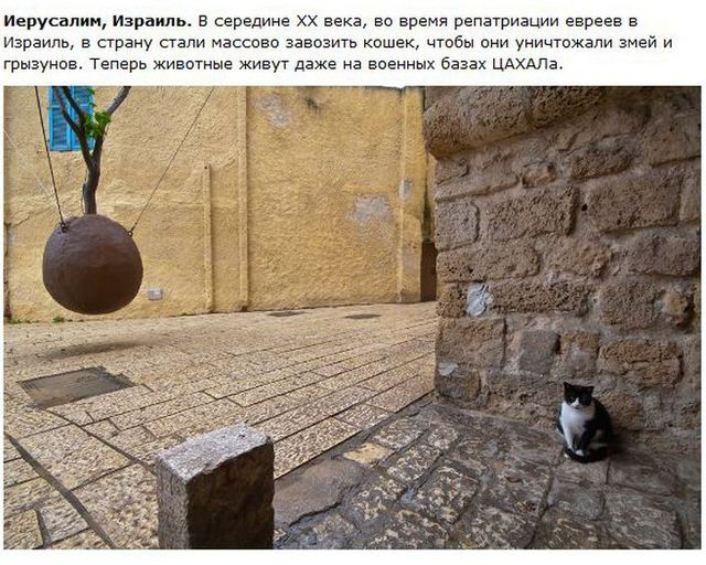 http://s.spynet.ru/uploads/posts/2012/0530/cat_23.jpg