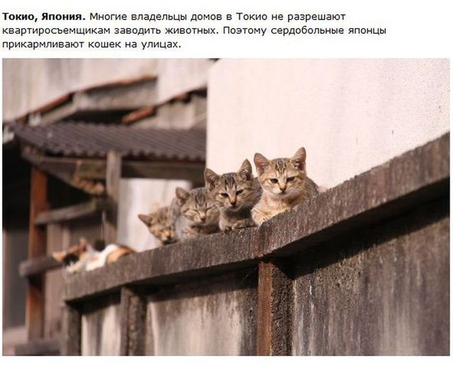 http://s.spynet.ru/uploads/posts/2012/0530/cat_24.jpg