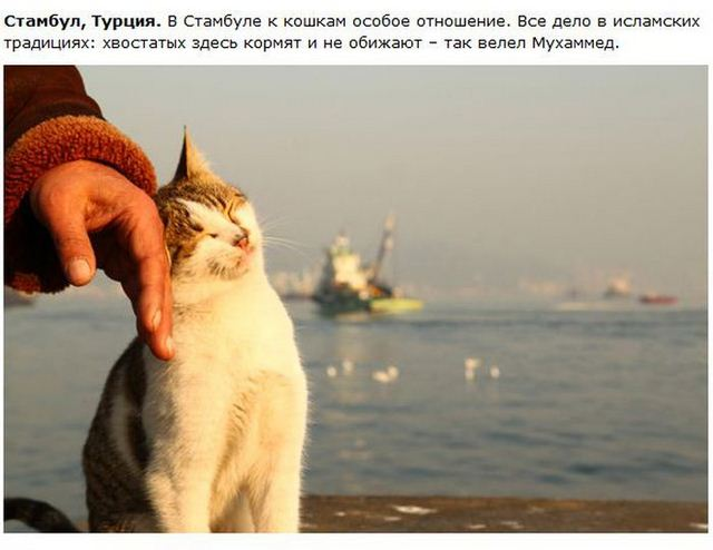 http://s.spynet.ru/uploads/posts/2012/0530/cat_25.jpg