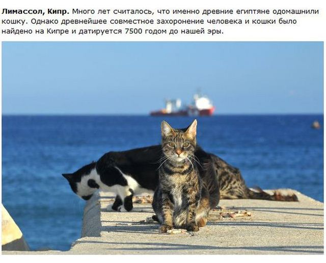http://s.spynet.ru/uploads/posts/2012/0530/cat_26.jpg