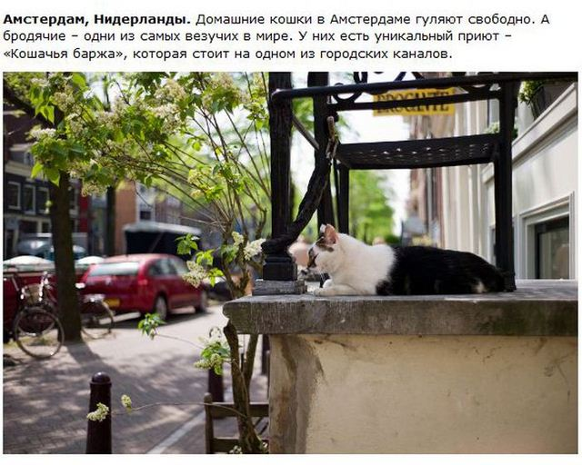 http://s.spynet.ru/uploads/posts/2012/0530/cat_27.jpg