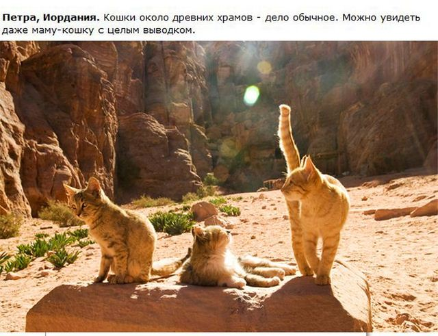 http://s.spynet.ru/uploads/posts/2012/0530/cat_28.jpg
